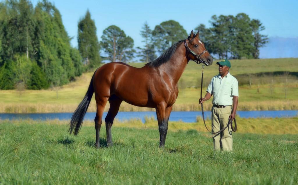 ato-stallion