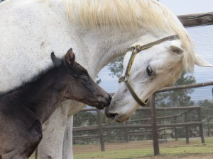Esmaltina Foals First KZN-Bred For Mary Slack