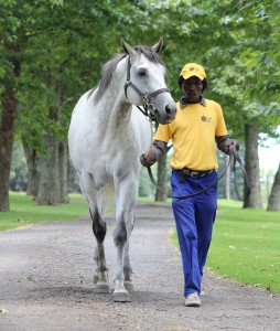 The Assayer at Yellow Star Stud, a son of Galileo. Image: Candiese Marnewick