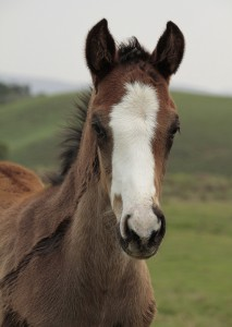 Rathmor Stud: Noble Tune First Foals