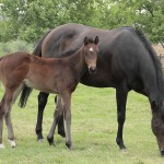 Noble Tune filly out Vestalia
