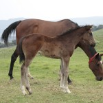 Noble Tune filly out of Approach Me by Righ Approach, a first foal.