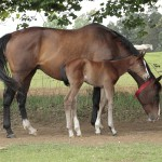First foal - newborn filly out of Mogok mare Red Armada.