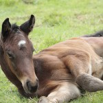 Colt out of mare Vestalia by Caesour, the mare a full-sister to 11-time winner Henry Higgins.
