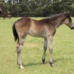 Colt out of Another Goat, mare a half-sister to Goat.