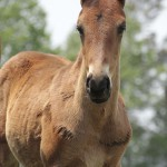 Big first born colt out of Dynasty mare, Summer To Remember.