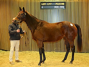 KZN News: Arqana December Breeding Stock Sale Results