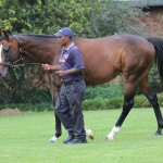 The only son of Giant's Causeway standing at stud in SA at the moment, a 4-time winner including the Gr3 Prix Eclipse. Eightfold Path  is out of a 5x Gr1 winning mare.