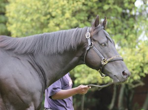 Debut Winner For Crusade At Vaal