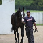 Mogok, a son of Storm Cat and a half-brother to Machiavellion. Sire of 4 Gr1 winners, two of them international.
