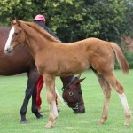 An outstanding first foal by Eightfold Path out of Brataloochee by Cataloochee.
