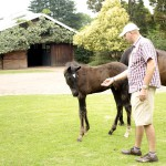 Warren with an Eightfold Path colt foal