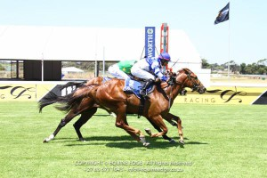 First Winner For Gr1 Kahal Mare Spiced Gold