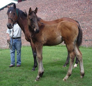 Gypsy Queen with Romany Prince as a foal at foot. Image: Rathmor Stud
