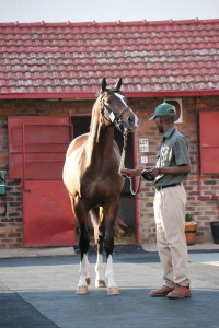 KZN's First Season Sires With First Yearlings For Sale In 2016