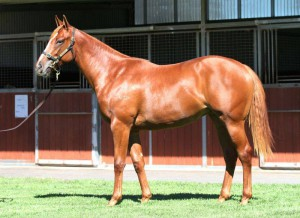 Chocolicious - Frankel Filly Sold For $610 000 At Inglis Easter Yearling Sale