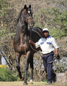 Vodacom Durban July Entries Announced