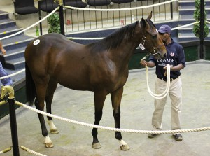 Lot 62, a son of Eightfold Path sold for R120 000 to Dean Kannemeyer.