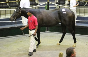 A son of Kildonan from Clifton Stud sold for R250 000 to Form Bloodstock.