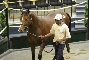 National Yearling Sale Day 1 - KZN Results