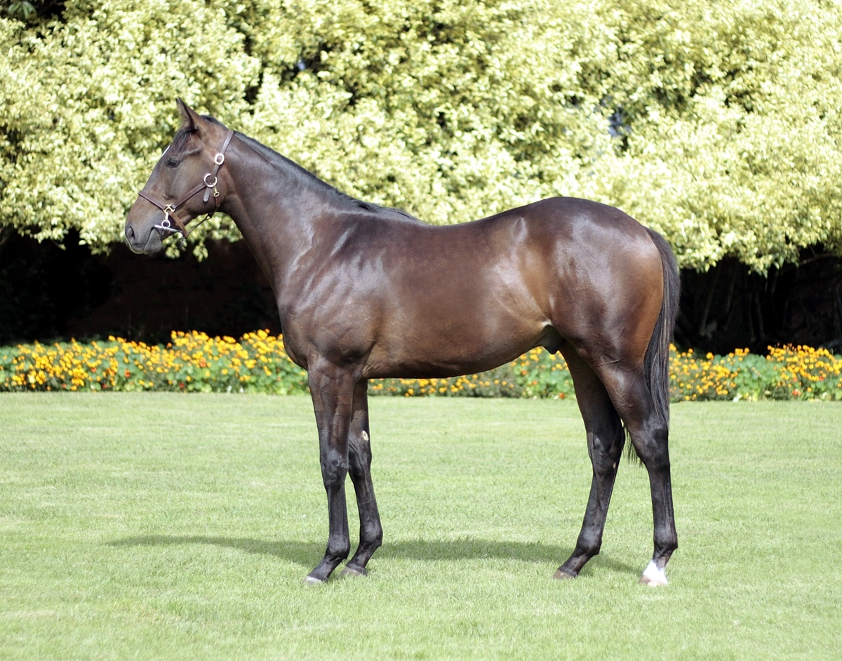 Lot 10 The Bayou Mogok – Blue Bayou by Foveros Full brother to Gr1 winner, ORBISON – 5 wins, including Gr1 Champions Cup. Family of Tarn Fairy, Yoshie and Fast Break.