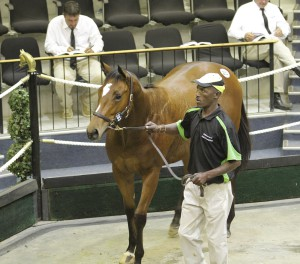 Mbali, by Eightfold Path and a halfsister to Gr2 winner Harry Lime, sold for R325 000.