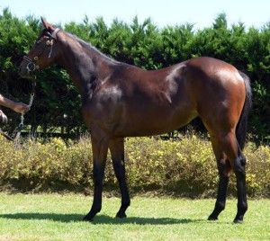 CTS Emperors Palace Select Yearling Sale Results For KZN