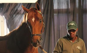 Spring Valley Stud - National Yearling Sales Draft