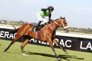 Act Of War Joins KZN Stallion Ranks For 2016