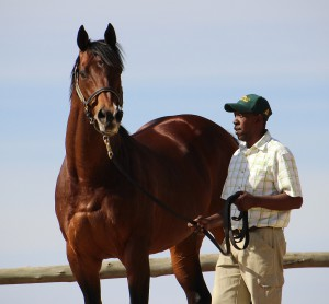 KZN-Bred Rabada Wins Gr1 Daily News 2000