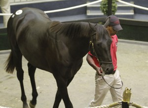 National Yearling Sale Day 3 - KZN Results