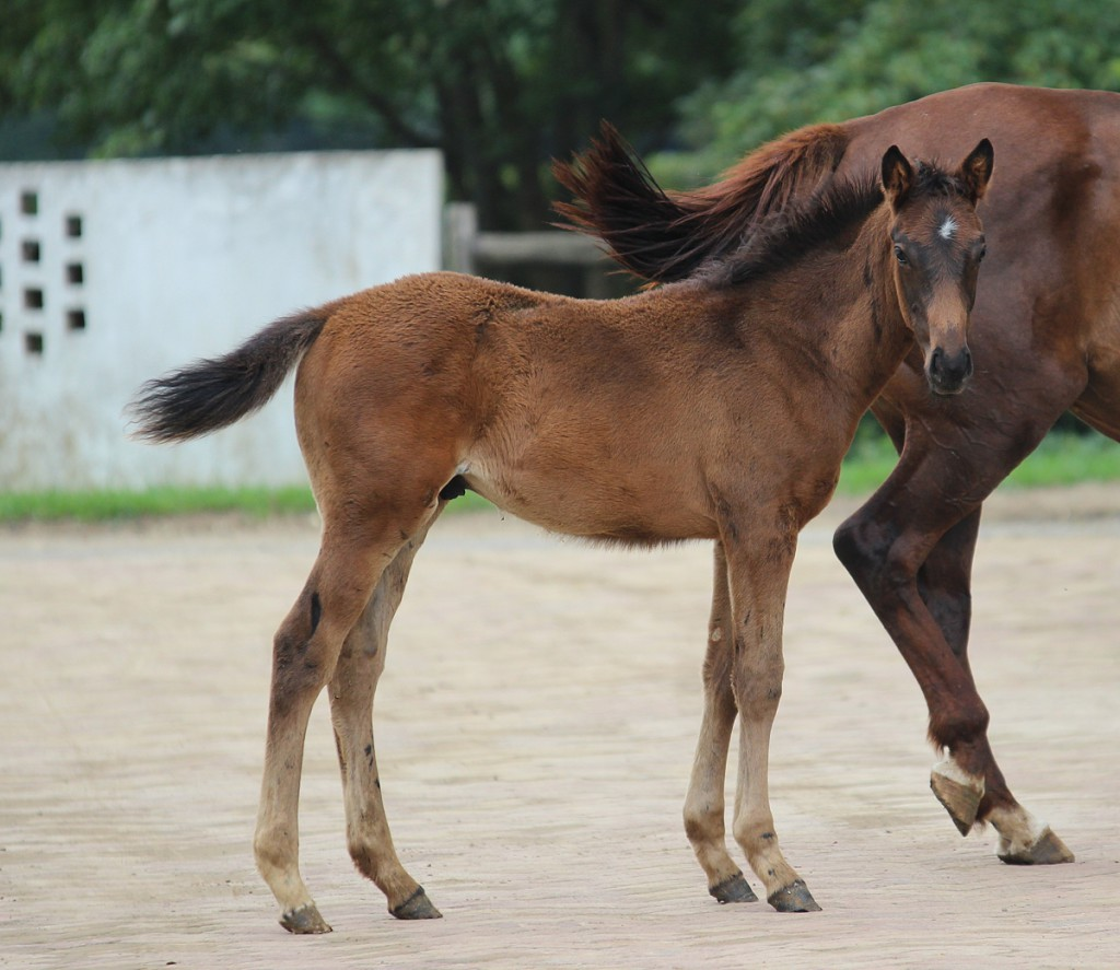 Prix Eclipse as a foal. Image: Candiese Marnewick