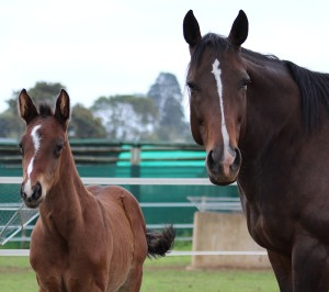 Wishful Eye with Toreador colt, Fillipo as a foal. He is a winner and placed twice from five starts Image: Candiese Marnewick