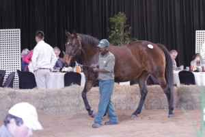 KZN Mare, Weanling, HIT, Yearlings and Fillies For Stud Sale Results