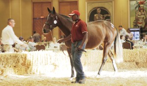 Crusade Heads Up First Season Sires at KZN Yearling Sale
