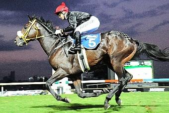 Journeyman, a Roski-bred Gr2 placed winner in Dubai.