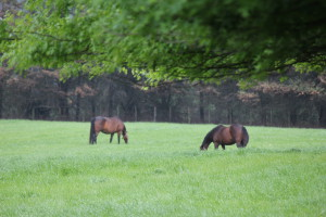 Broodmares Available