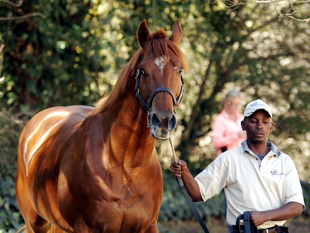 Stallion News