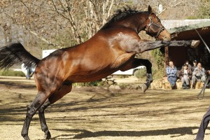 Bush Hill Stud Stallion Day: Photo Gallery