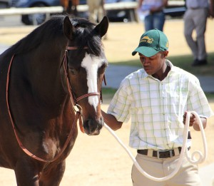 Summerhill Stud Welcome First Crop By Capetown Noir