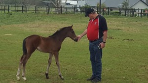 A super Noble Tune foal out of Madam Tigre by Tiger Ridge at Summerview Stud.