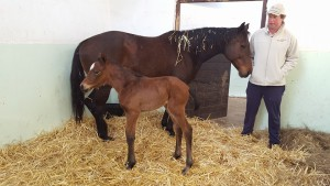 A Curved Ball filly at Bush Hill Stud, out of Kenmare House from their family of Zirconeum and Stellite.