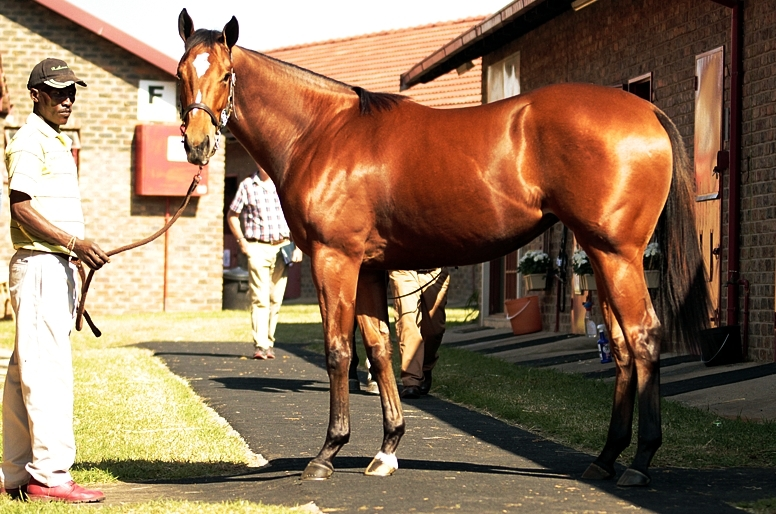 Mbali as a yearling. She sold for R325 000 from Rathmor Stud, Eightfold Path's highest priced yearling to date. Image: Candiese Marnewick