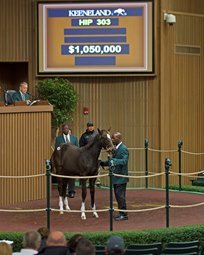 Noble Tune's Weanling Tapit Half-Brother Sells for Over $1million