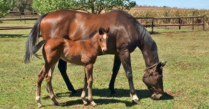 Backworth Mare Produces Two Speedster Record Holders