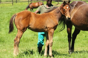 Ideal World - Rattled by Alami. This filly is a half-sister to Harry Lime.