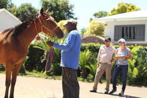 National Yearling Sales Inspections: Gallery