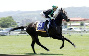 Crusade's Calladdi Leads KZN Breeders Series Juvenile Log