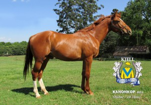 Kanonkop as a yearling.
