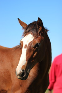 Clifton Stud: Foals 2016